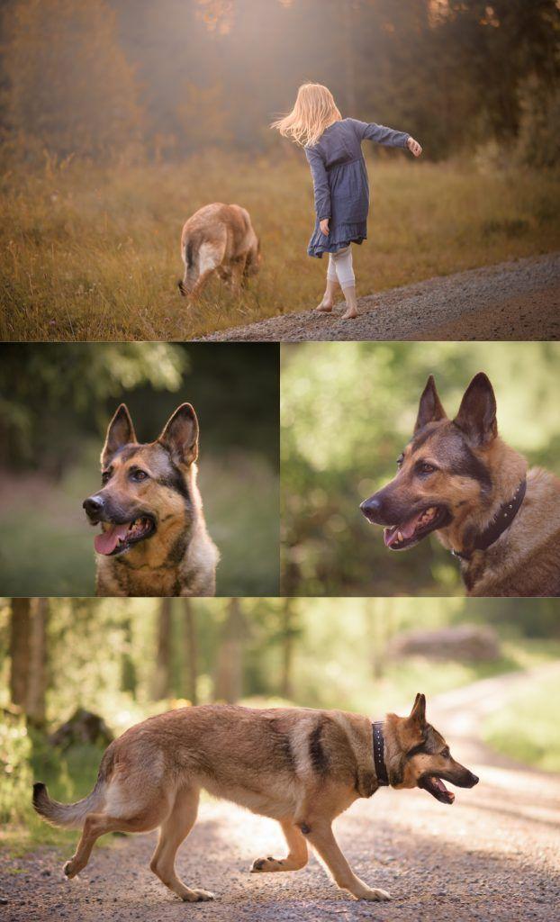 Dog photography by Swedish photographer Maria Lindberg. Hundfotografering av fotograf Maria Lindberg. www.fotografmarialindberg.se