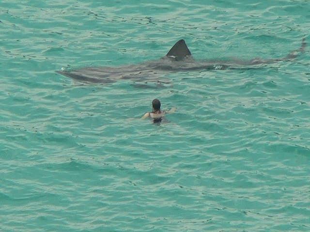 15 Unbelievable Shark Pics Taken By Drones