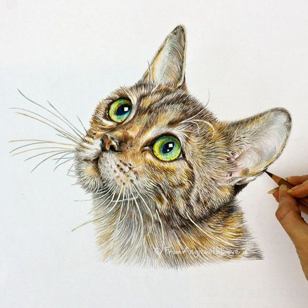 Tabby Coloured Pencil Cat Portrait Hand Drawn By Angie X Color Pencil Sketch Pencil Drawings Of Animals Cat Portraits