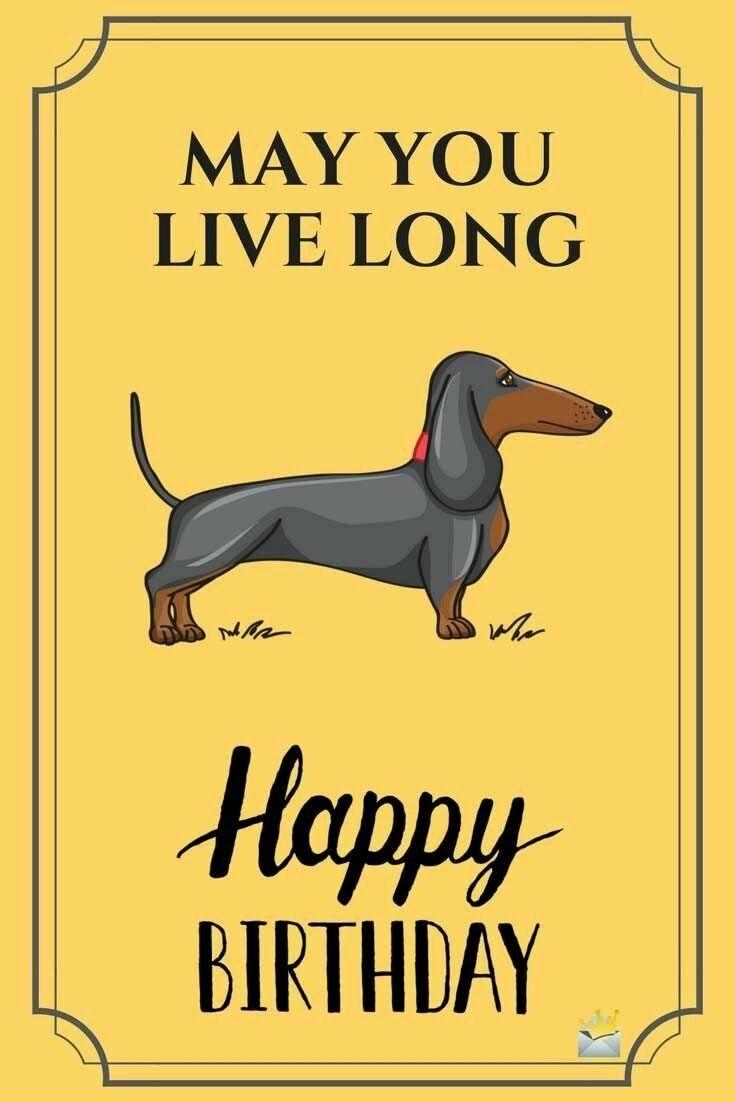 Birthday Happy Birthday Dachshund Birthday Humor Birthday