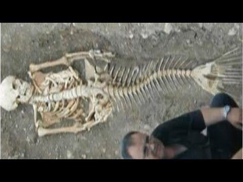 ritrovato scheletro di sirena: incredibile!