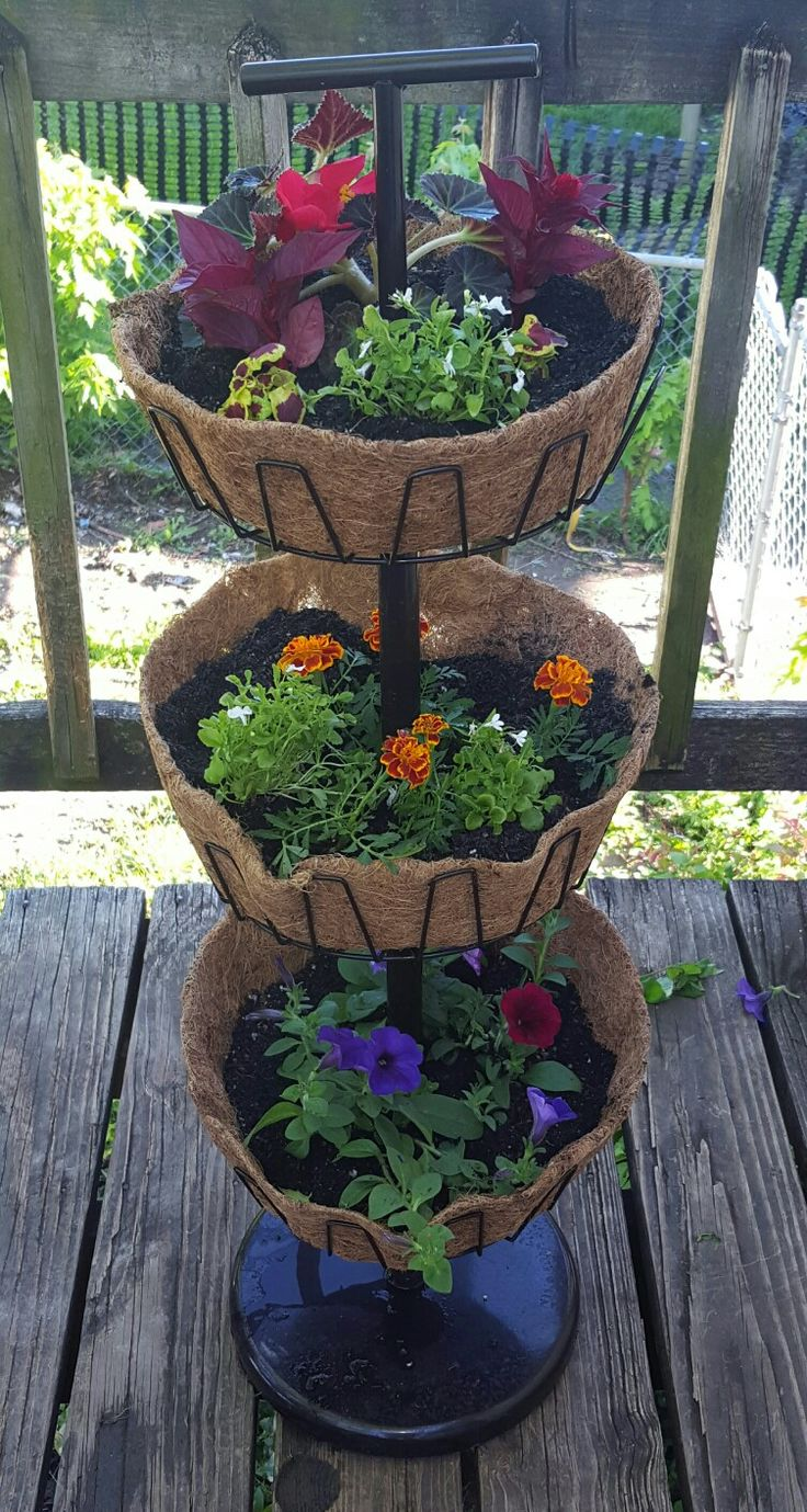 Three tier planter.  Used an old shoe rack bought from a antique store for $4 and coco liners.