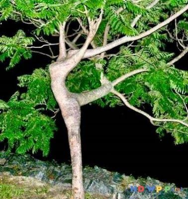 Amazing Dancing Tree