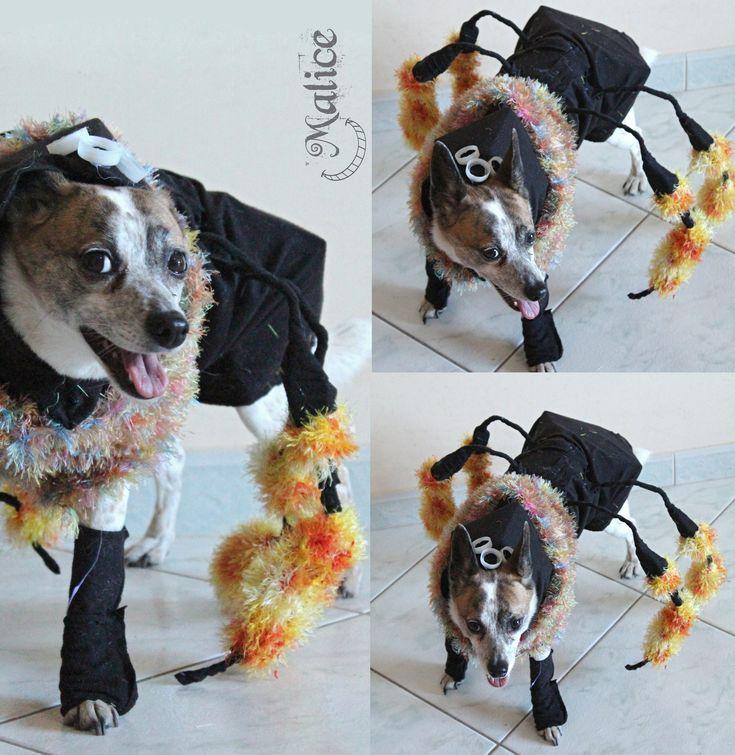 RAGNO Costume di carnevale per cane.  I costumi devono essere indossati dai cani solo per brevissimi periodi e sempre sotto la supervisione attenta di un adulto.
