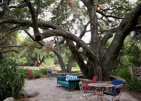 This is the most BEAUTIFUL tree God has created!Southern California, Patios Furniture, Outdoor Living, Back Yards, Gardens Furniture, Vintage Furniture, Outdoor Spaces, Backyards, Turtles Conservative