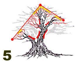 Pruning example 5 creating more open crown.jpg (16250 bytes)