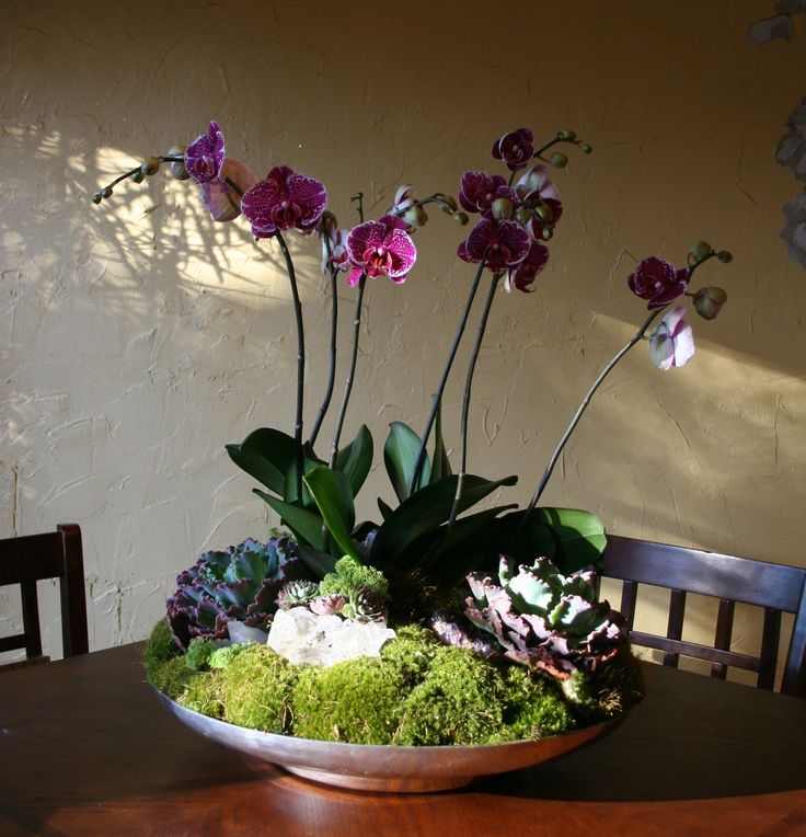 A dark pink orchid arrangement contrasts nicely with the green shades of the succulents.