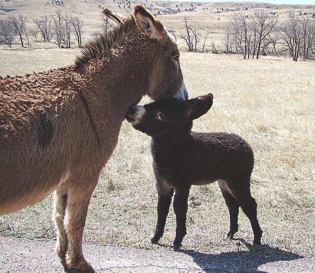 Love You Mom by Sandy*S, via Flickr