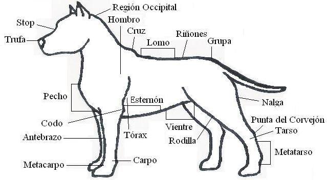 partes del perro
