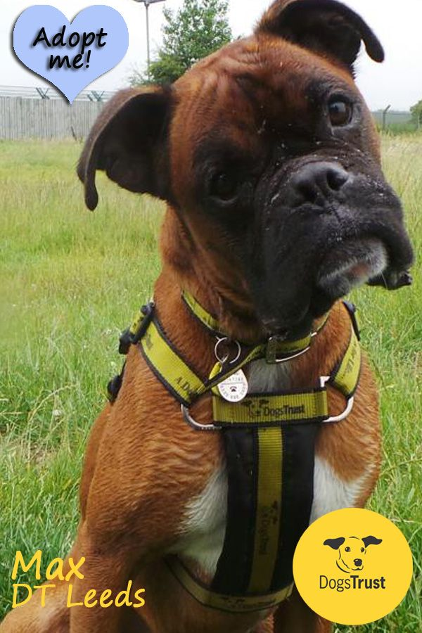 Max is super bouncy and really daft. He would like a confident and energetic owner that can keep up with him.