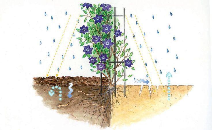 Bodenpflege: Der Mulch macht's - Viele Pflanzen blühen in einer Mulchschicht erst so richtig auf. Die Bodenabdeckung unterdrückt nicht nur Unkraut – Mulch hat viele weitere Vorteile.