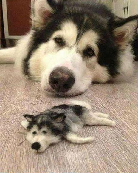 【画像】ハスキー犬の毛で作られた人形がハスキー犬すぎる / Twitterユーザーの声「かわいいなぁ」「脱力感すごい」など