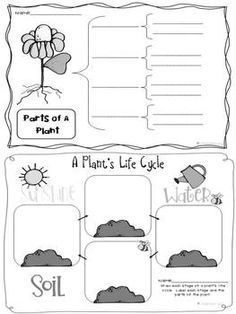 graphic organizers for the life cycle of plants | Life Cycle of Plants graphic organizers