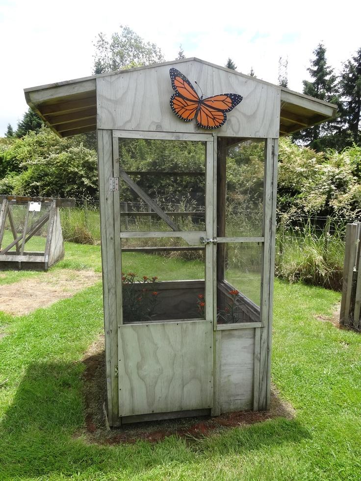 The Monarch Butterfly House in McGregors Garden  http://www.amazeme.co.nz/