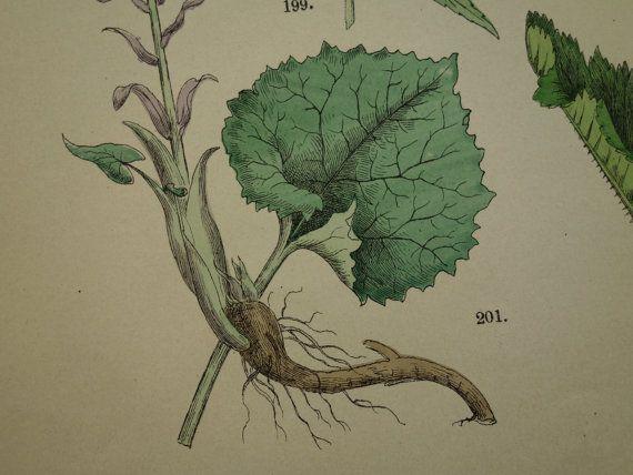 1884 old botanical print lovely antique floral by DecorativePrints