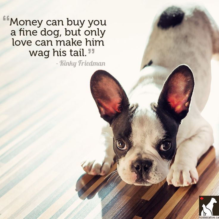 Inspirational Pet Quotes: 11 Quotes For The Love Of Dog (or Cat)