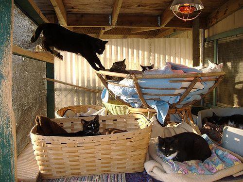 RAPS Cat Shelter Pic   Repurposed Papasan Chair