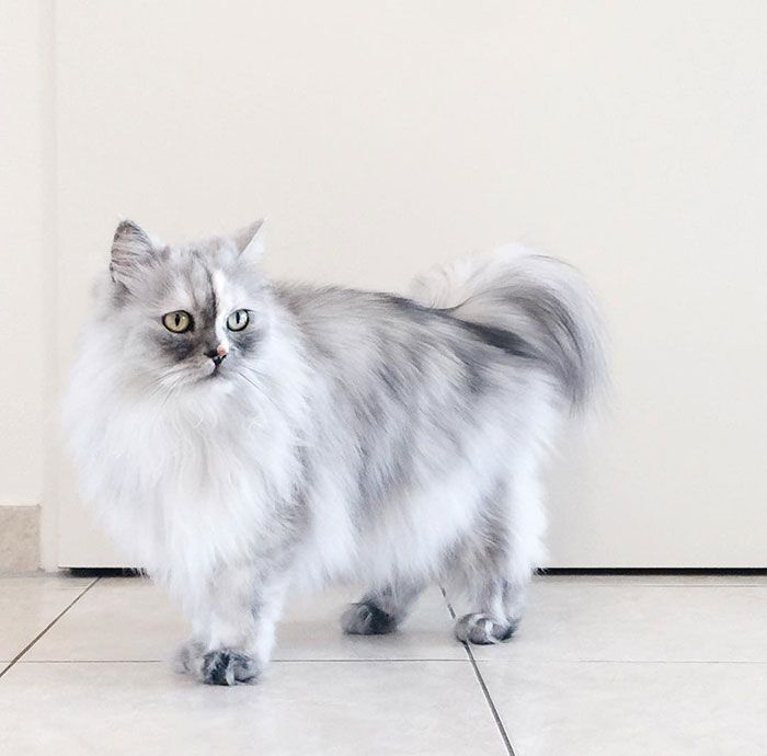 Alice, a gorgeous darling with marble fur. She looks like a piece of living artwork.