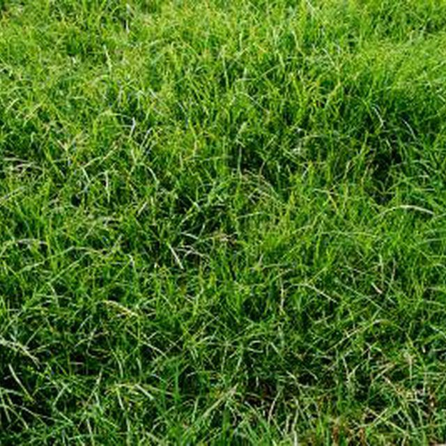 17 best ideas about zoysia grass on pinterest drought resistant grass lawn care and lawn care - Drought tolerant grass varieties ...