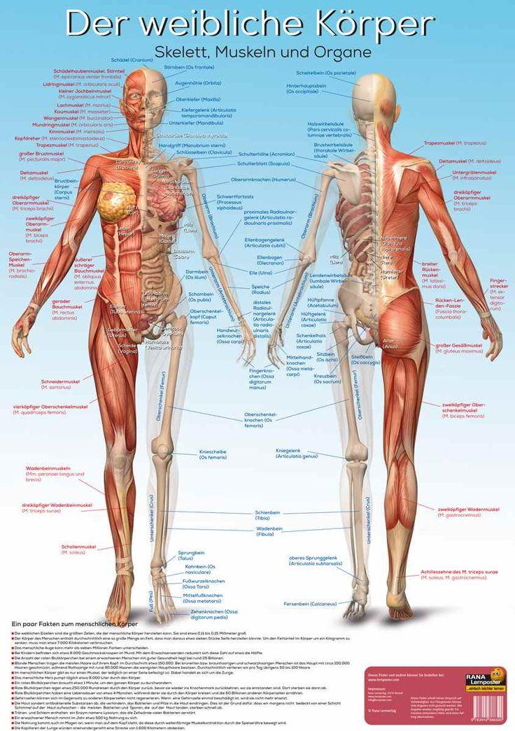 12 best arman images on Pinterest | Anatomy, Deutsch and Anatomy ...