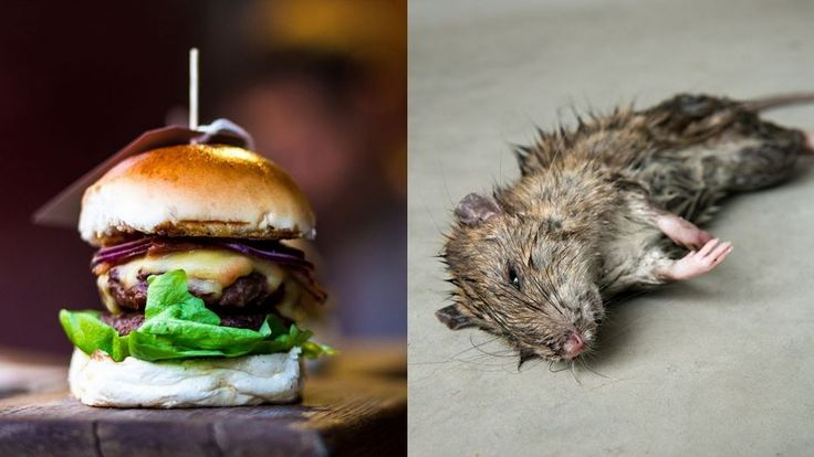 Burger contained fully-fledged hairy mouse claims Australian man