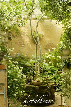 白扇の咲くパティオガーデン