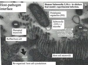 Host-pathogen interface - Corsica