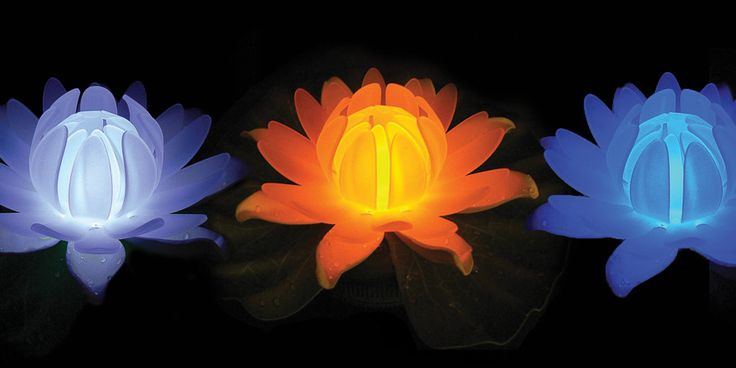 The Glow Lily has 3 different color modes: White, Amber, & Blue.