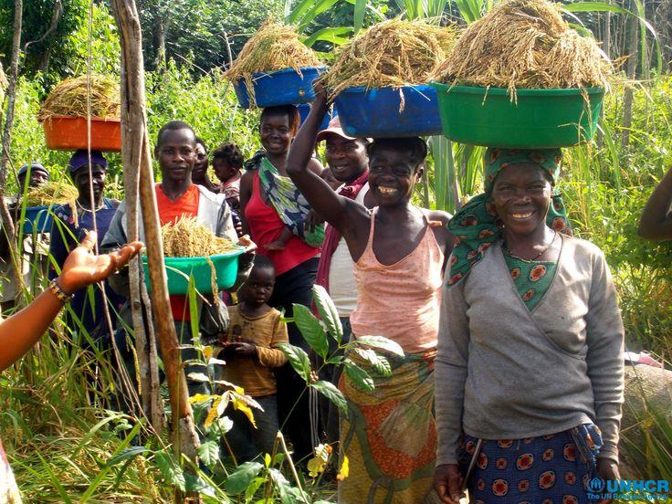 Quest'anno il raccolto è abbondante a Dungu, Repubblica Democratica del Congo. Queste donne in passato sono state vittime delle milizie, ma ora portano avanti una fattoria e un forno di successo, istituito da Suor Angelique con i fondi del Premio Nansen 2013 assegnato dall-UNHCR. Suor Angelique ha trasformato la vita di più di 2mila donne e ragazze vittime di abusi e lontane da casa che grazie al suo aiuto stanno ricominciando a vivere.