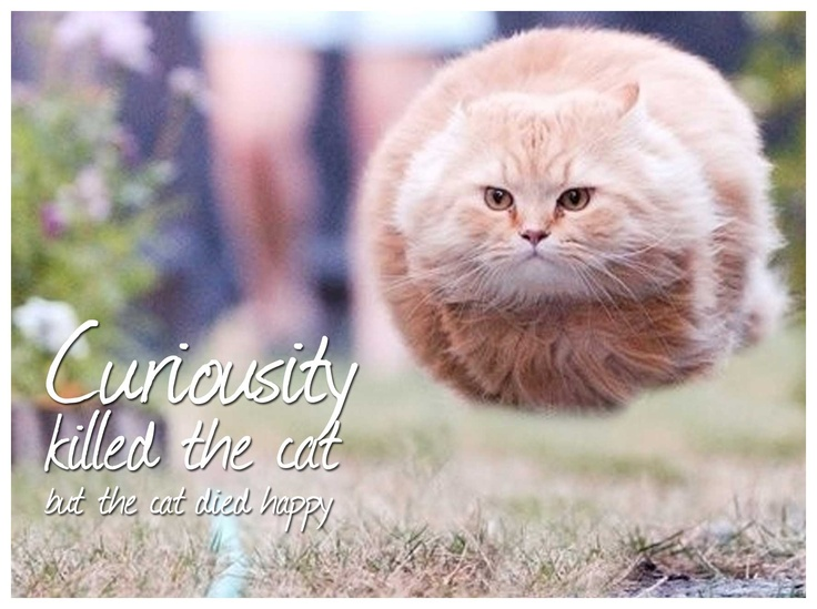 curiosity killed the cat | Food for your thoughts ...