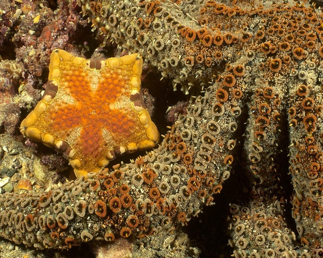 best star fish images under the sea stars and orange starfish and octopus