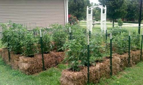 This video shows you exactly how to condition a straw bale for planting so that you can grow vegetables directly into them