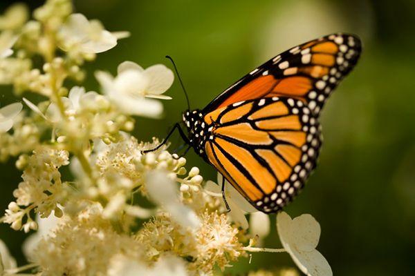 como-atrair-borboletas-para-seu-jardim