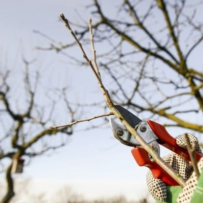Winterizing Fruit Trees: Tips On Fruit Tree Care In Winter -  For many fruit tree diseases, prevention is easier to accomplish and costs less than a cure. Just a few well-timed and well-chosen sprays can do a lot toward controlling fruit tree problems. Learn about winter treatment for fruit trees in this article.