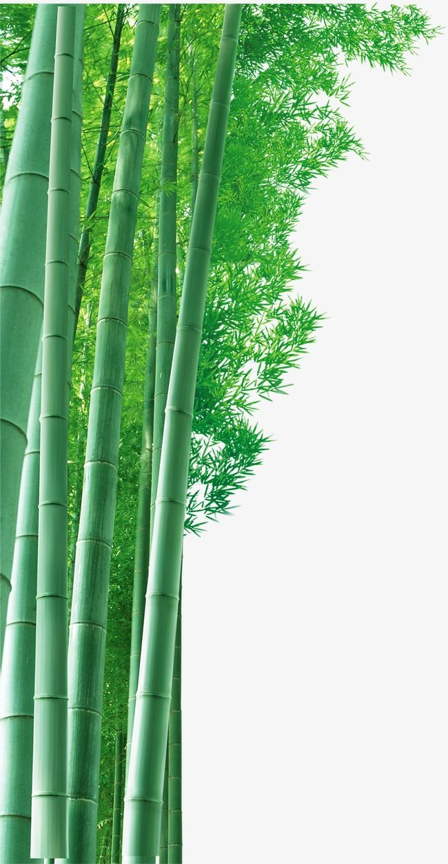 Hd Bamboo Background Material Bamboo Clipart Bamboo Background Png Transparent Clipart Image And Psd File For Free Download Latar Belakang
