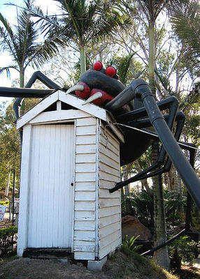 The Big Redback spider