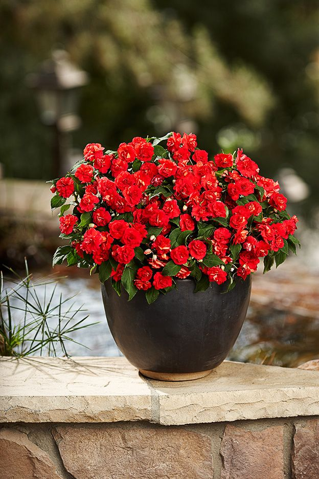 55 Best Images About Single Plants For Containers On