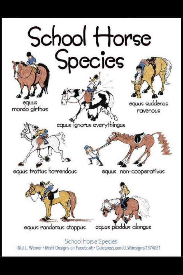Ridden every one! Particularly remember Mondo Girthus, Ignorus Everythingus, and Non-Cooperativus.