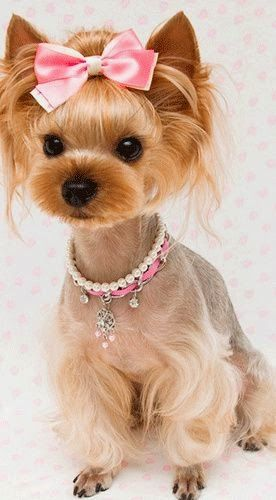 Pampered pets ✿⊱╮