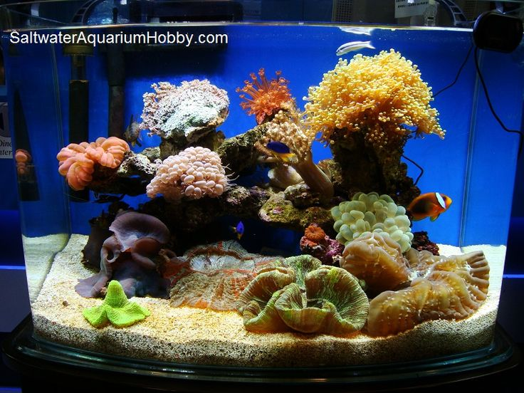 84 best images about saltwater fish on pinterest for Cycling a fish tank