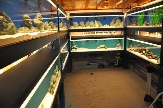 17 Best images about Aquarium Stuff on Pinterest | Aquarium stand, Diy ... 10 Gallon Vivarium