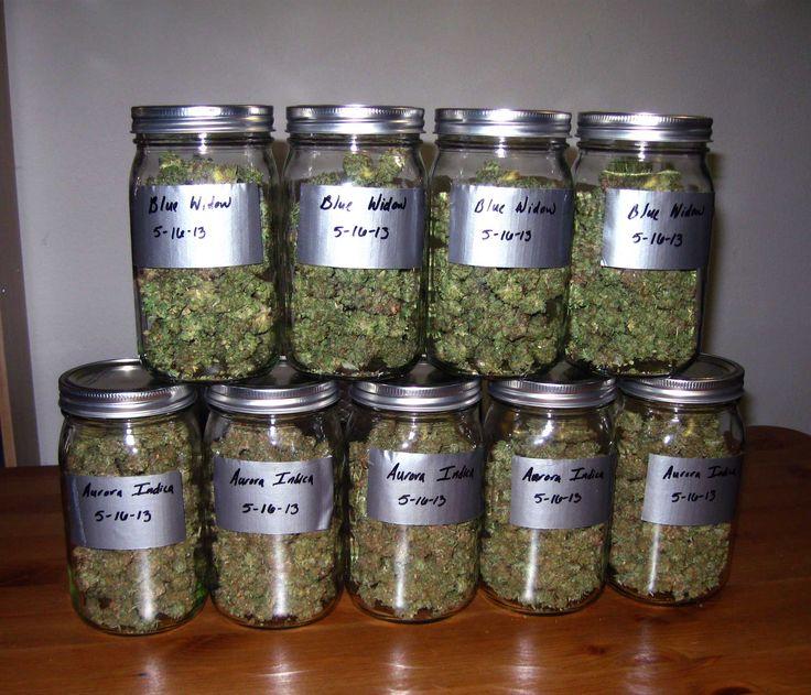 Best 25 Growing Weed Ideas On Pinterest Marijuana Facts