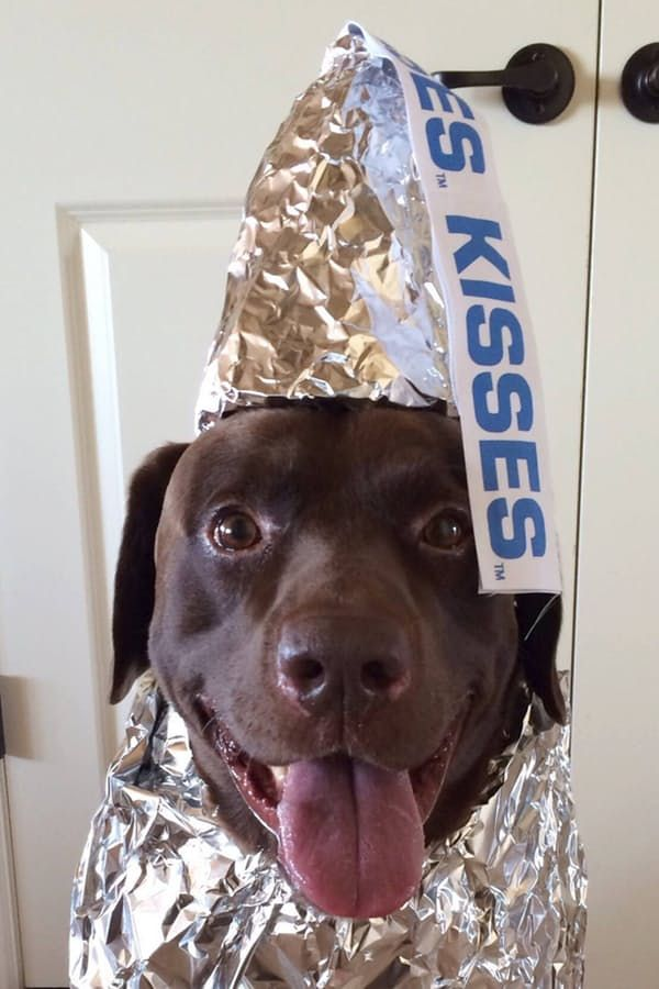 Kisses, we can't guarantee how long it will stay on, but we love this Halloween pet costume.