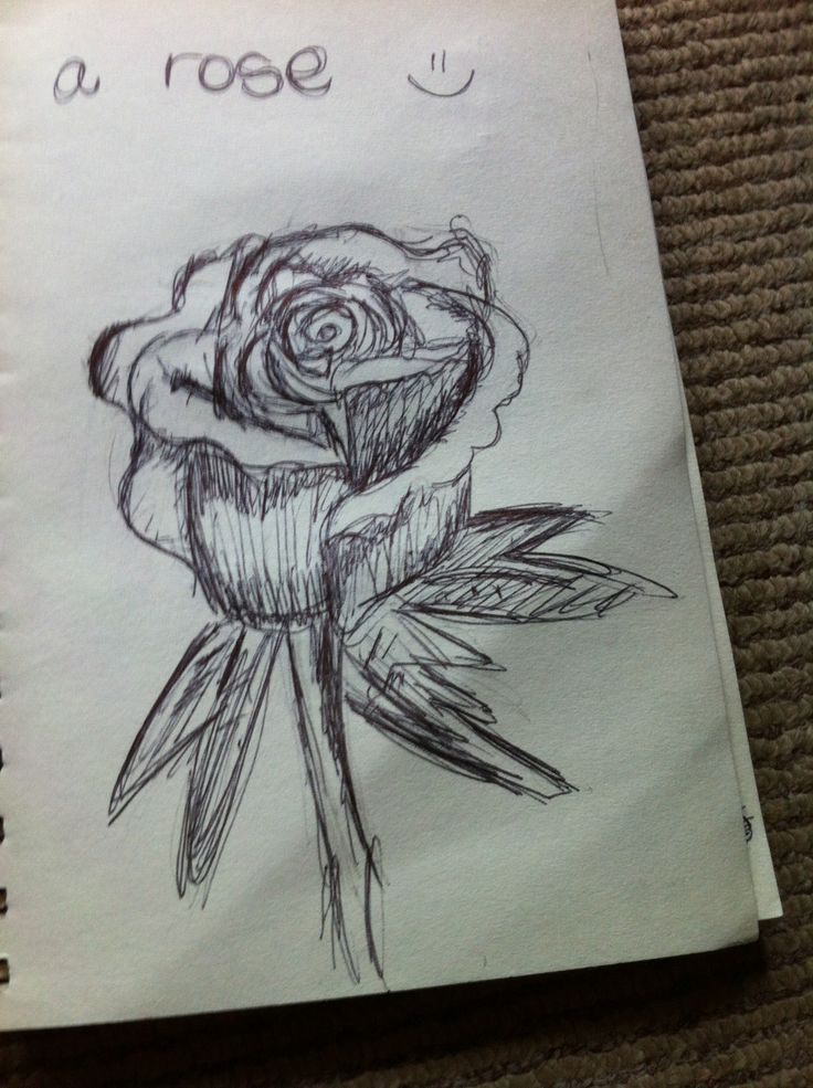 Just a pen sketch of a rose :)