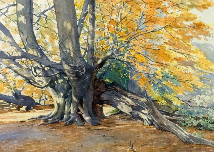Beech Tree in Autumn (watercolor by Brian Robinson)