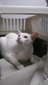 La visita al veterinario con nuestro gato | Noticias animales