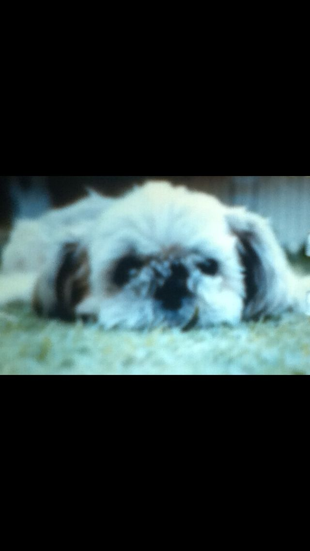 This is my dog but 4 years ago he died and it was on valentines day
