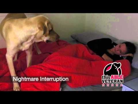 how to become a ptsd service dog trainer