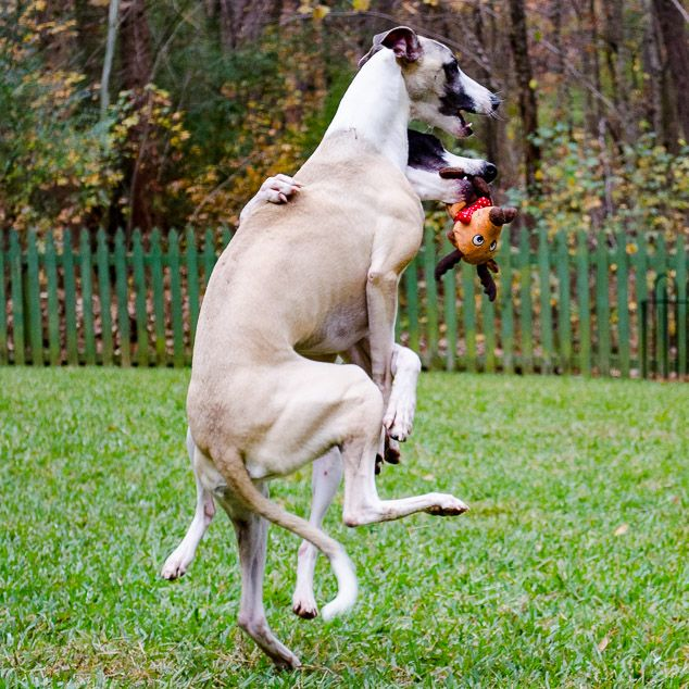 Shall We Dance Fun Photos Of Dogs Playing Together With Images