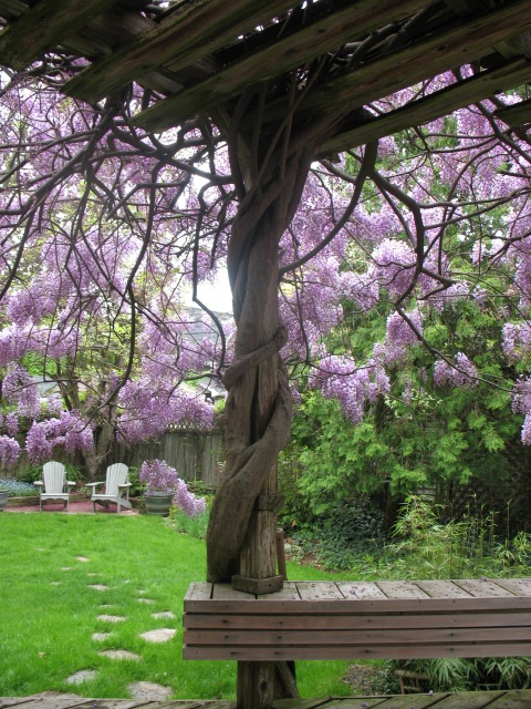 Landscaping With Climbing Plants : Best images about gardening climbing vines on
